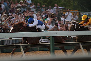 Shackleford (horse) - Shackleford (left) leading Astrology in the stretch during the 2011 Preakness Stakes.