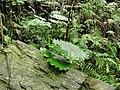 Shakadang Trail 03.jpg