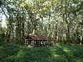 Shelter and floodplain forest, Beliczay Island. - Érd, Hungary.JPG