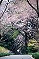 Shinjuku Park - panoramio (1).jpg