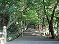 Shirayamahime-境内-表参道-一の鳥居から.JPG