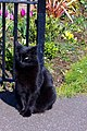 Sid the library cat - geograph.org.uk - 760925.jpg