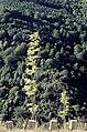 Sierra de la Demanda 02.jpg