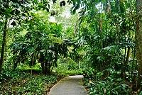 Singapore Bukit Timah Nature Reserve 5.jpg