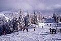 Skiing between the snow-topped trees (Unsplash).jpg