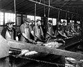 Slimers at work at Apex Fish Co, Anacortes (CURTIS 152).jpeg