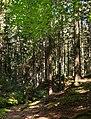 Slope into Gullmarsskogen ravine 2.jpg
