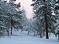 Snow in Eugene.JPG