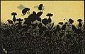 Sommermotiv tegnet av Thorolf Holmboe (26658568449).jpg