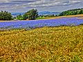 Sophienberg (HDR-Art) - panoramio.jpg