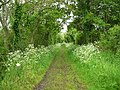 South Somerset cycle path - geograph.org.uk - 12217.jpg