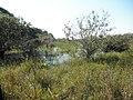 Southern Pantanal wetlands.jpg