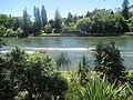 Speedboats on the Waikato River, Hamilton 06.JPG