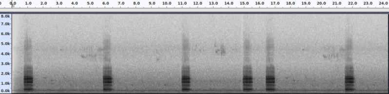 Súbor:SpektrogramDrummingDendrocoposMajor.png