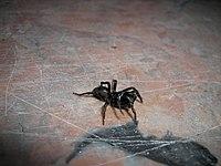 Spider029.jpg