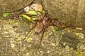 Spider (FG) (7284994096).jpg