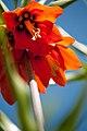Spring (5606839066).jpg