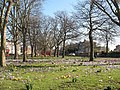 Spring comes to Batley Park - geograph.org.uk - 1197196.jpg