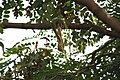 Squirrel - panoramio - sabareesh kkanan sub….jpg