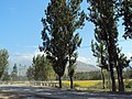 Srinagar - Pahalgam views 06.JPG