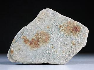 <i>Volborthella</i> genus of animal (fossil)