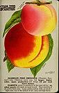 Stark fruits (1896) (20357943709).jpg