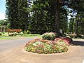 Starr-090714-2744-Impatiens walleriana-flowering habit-Kapalua-Maui (24342817143).jpg