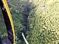 Starr-141014-2195-Caesalpinia decapetala-aerial view-Kakipi Gulch Haiku-Maui (25128936472).jpg