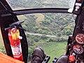 Starr-141014-2248-Caesalpinia decapetala-aerial view Hana Hwy-Kakipi Gulch Haiku-Maui (24616674784).jpg