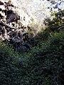 Starr 020221-0050 Rubus glaucus.jpg