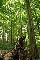 Steenbergse bossen 07.jpg
