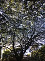 Street canopy.jpg
