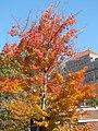 Stuyvesant Square Tree (4036492858).jpg