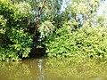 Sundarban (92).jpg