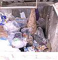 Supermarket dumpster.jpg