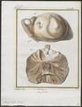 Sus scrofa domestica - ingewanden - 1700-1880 - Print - Iconographia Zoologica - Special Collections University of Amsterdam - UBA01 IZ21900159.tif