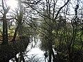 Sylvan Scene - geograph.org.uk - 116070.jpg