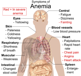 Main symptoms that may appear in anemia 20