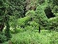 Syretsky arboretum 1.JPG