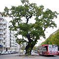 TV-eken och Lilleken 2011-10-17.jpg