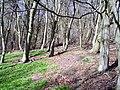 Tam's Wood - geograph.org.uk - 150025.jpg