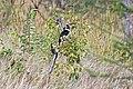 Tarangire 2012 05 28 1750 (7468567792).jpg