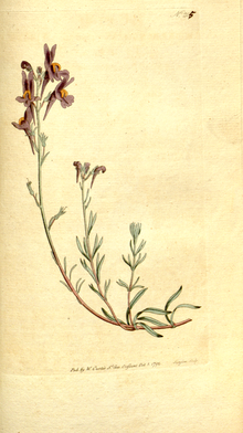 The Botanical Magazine, Plate 205 (Volume 6, 1793).png