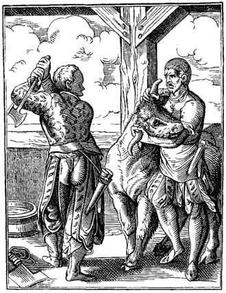 Animal slaughter - The Butcher and his Servant drawn and engraved by J Amman Sixteenth Century