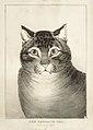 The Favorite Cat MET DR52.jpg