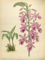 The Orchid Album-01-0095-0031.png