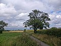 The Saxby to Barton Road - geograph.org.uk - 486847.jpg