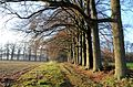 The dark days before Christmas give fine views with the low sunbeams at these row of Oaks (zomereik) at Hoge Erf Schaarsbergen - panoramio.jpg