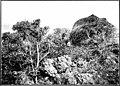 The indigenous trees of the Hawaiian Islands (1913) (20732712341).jpg