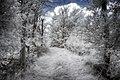 The path (19514269676).jpg